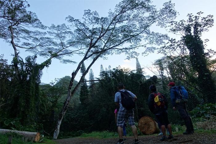 Hiking Lua'alaea and Aihualama Falls