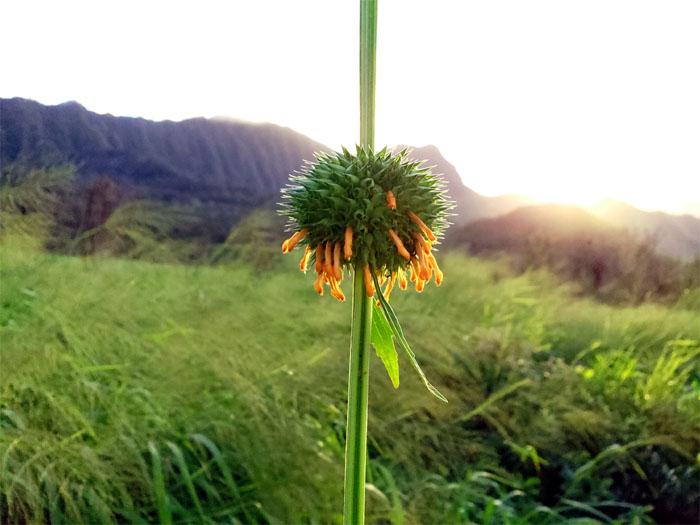 Hiking Pu'u Kawiwi to Mount Ka'ala