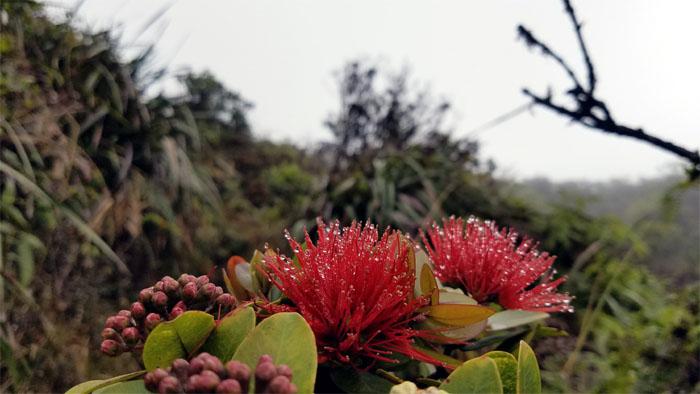 Hiking Kalawahine Trail to Hawaii Loa Ridge