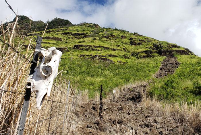 Hiking Kawiwi Ridge to Tiki Ridge