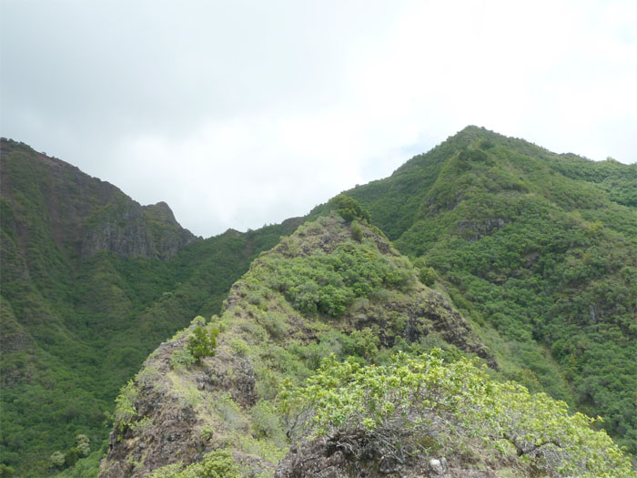 Hiking Kea'au Ridge
