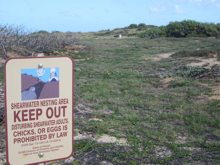 Hiking Kaena Point