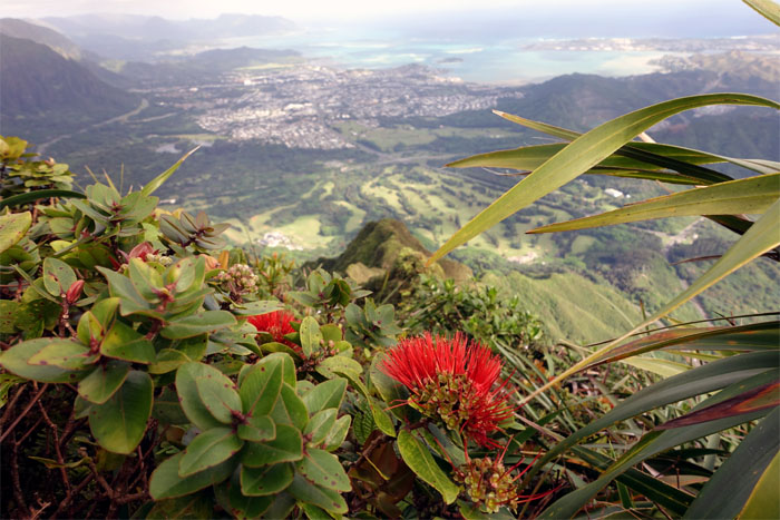 Hiking Kalawahine Trail to Pali Notches