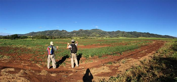 Hiking Pu'u Kaua to Palehau