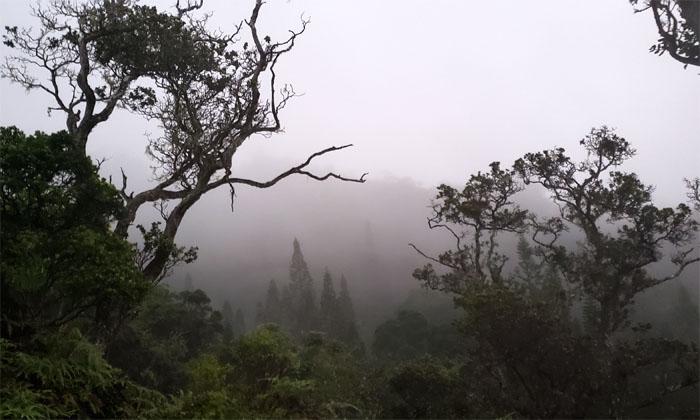 Hiking Kuli'ou'ou Ridge to Ka'au Crater