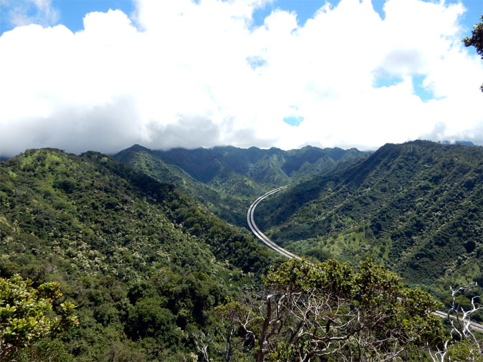 Hiking Aiea Loop Trail ( Kalauao Falls and Plane Crash )