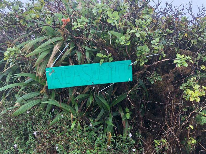 Hiking Aiea Loop Trail to Aiea Ridge Trail