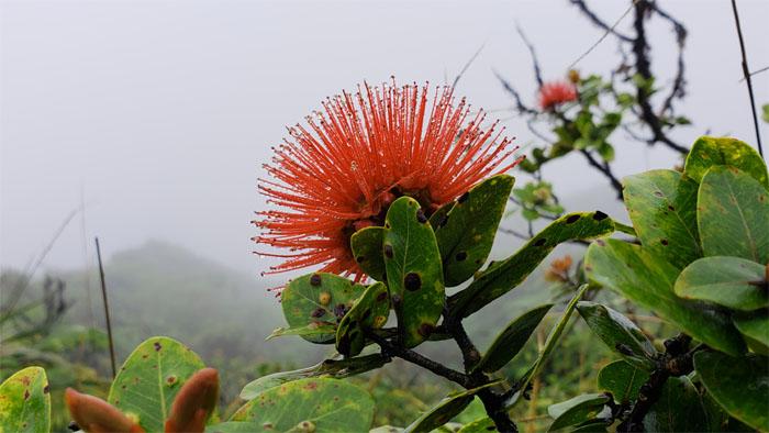 Hiking Manoa Falls to Ka'au Crater