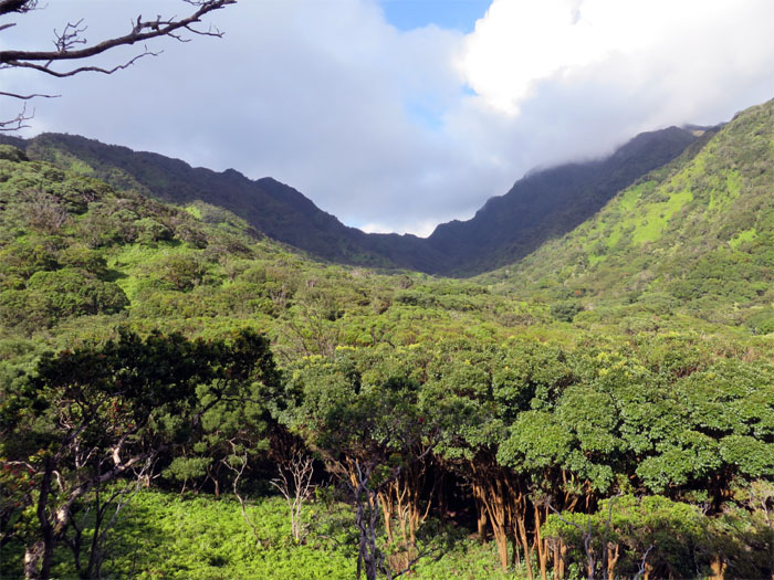 Hiking Moanalua Saddle to Red Hill