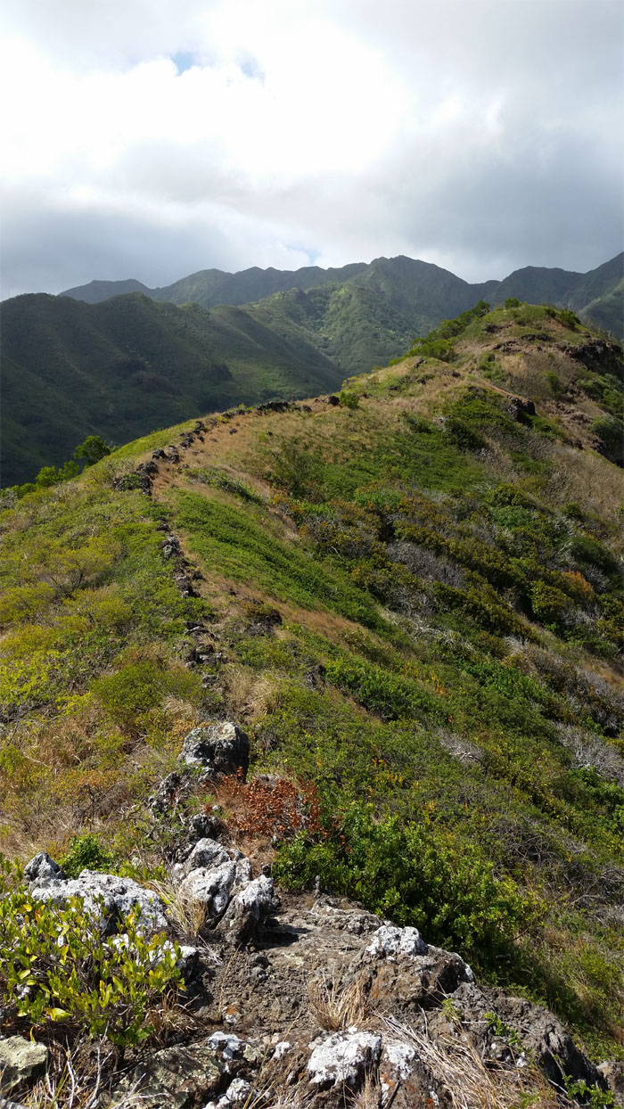 Hiking Kuli'ou'ou Ridge to Kalapaomana Ridge