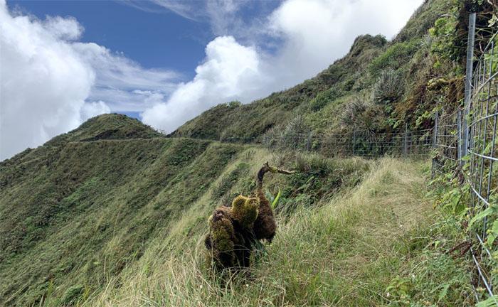 Hiking Poamoho Trail to Upper Waimano Trail