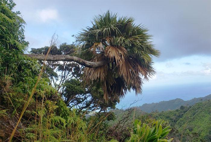 Hiking Poamoho Trail to Laie