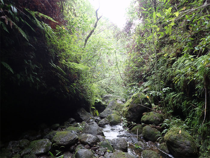 Hiking Manoa Falls to Summit