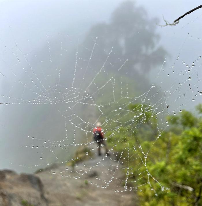 Hiking Wiliwilinui to Hahaione Valley