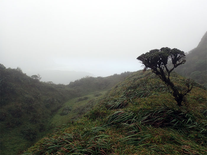 Hiking Waiau Ridge to Waimalu Middle RIdge
