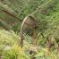 Thumbnail image for Aiea Ridge to Haiku Stairs