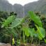 Thumbnail image for Hi'ilawe Falls