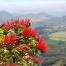 Thumbnail image for Hobb's Ridge to Bolohead Ridge