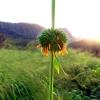 Thumbnail image for Pu'u Kawiwi to Mount Ka'ala