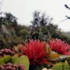Thumbnail image for Kalawahine Trail to Hawaii Loa Ridge