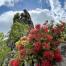 Thumbnail image for Kalihi Valley to Pali Puka