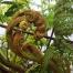 Thumbnail image for Manana Trail to Waiahole Ridge