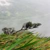 Thumbnail image for Moanalua Middle Ridge to Kalihi Saddle (Powerlines)