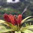 Thumbnail image for Kalihi Saddle (Powerlines) to Na Pueo Park