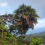 Thumbnail image for Poamoho Trail to Laie