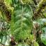 Thumbnail image for Poamoho to Manana Trail