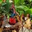 Thumbnail image for Ahuimanu Falls