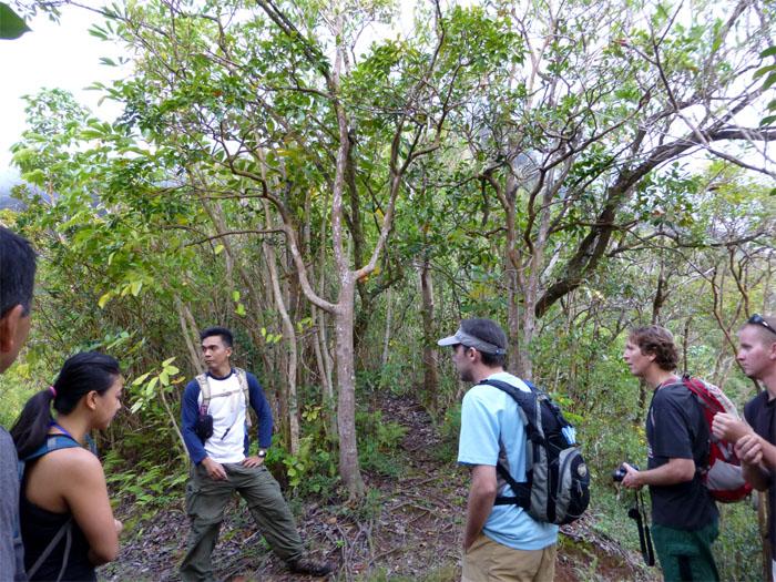 Piliwale Ridge trailhead