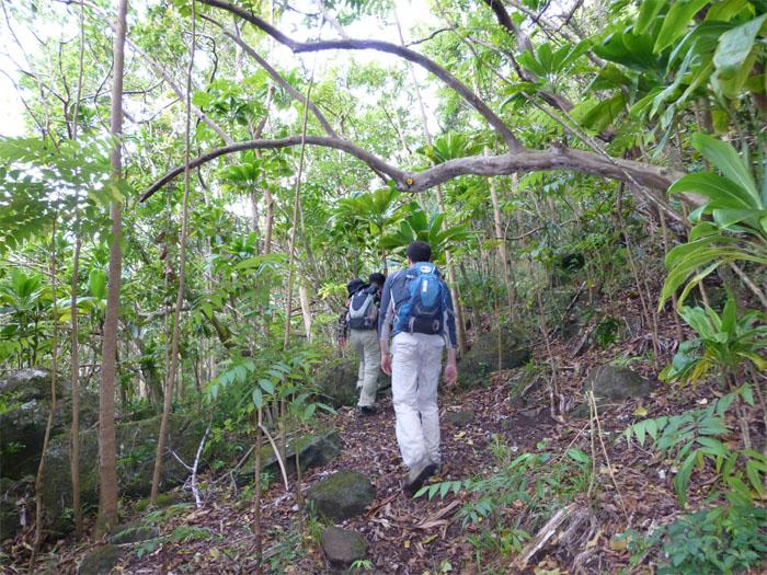 Waianae Kai Forest