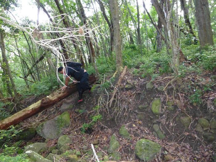 Finding the breadcrumbs in Waimanalo