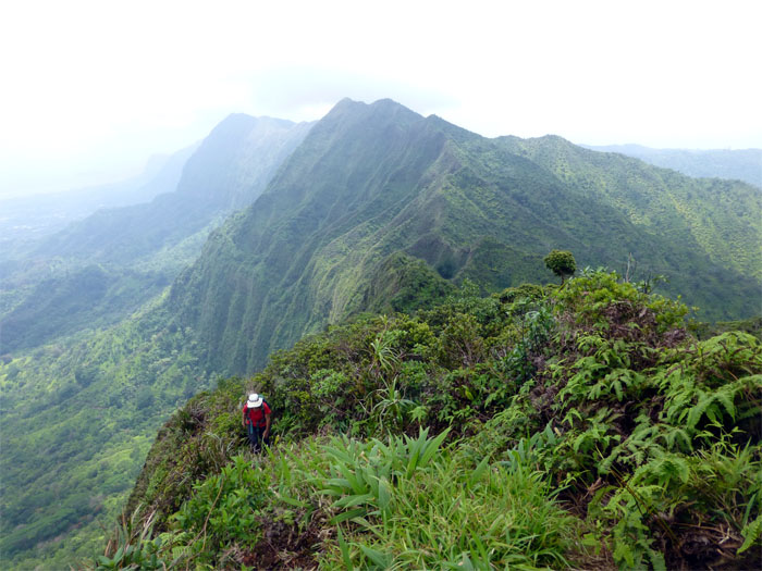 Making it up to the Manoa Middle Ridge