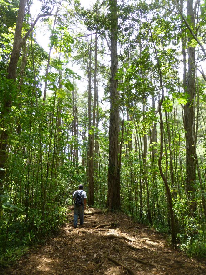 Puu Pia trail