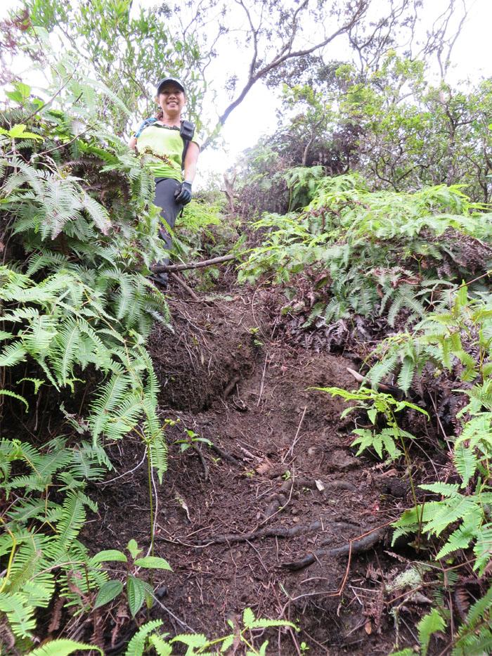 Pig trail?