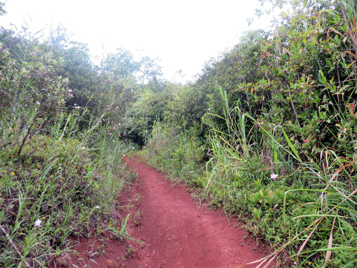 Bamboo orchid trail