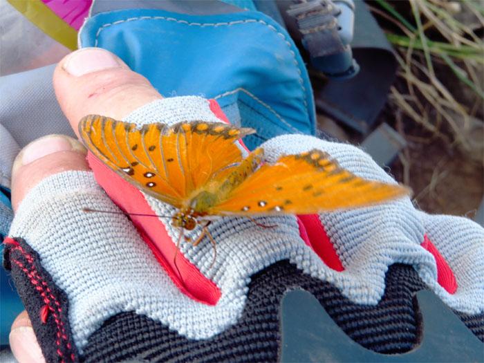 Butterfly Bob