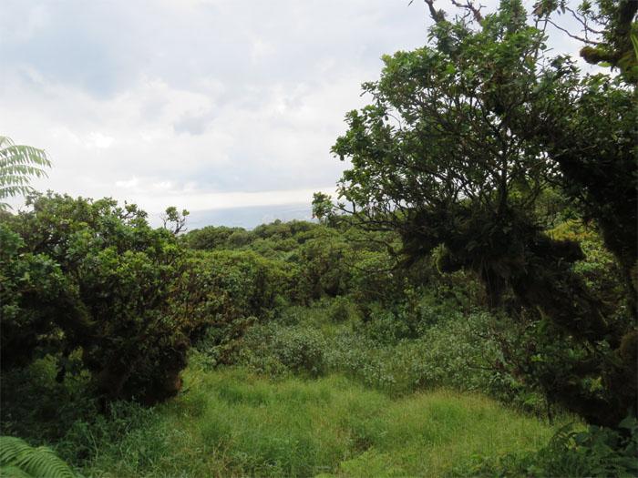 Marshy meadow