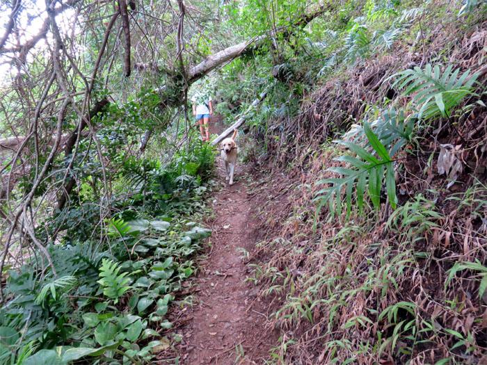 Four legged hiker