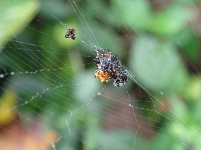 Spider #3