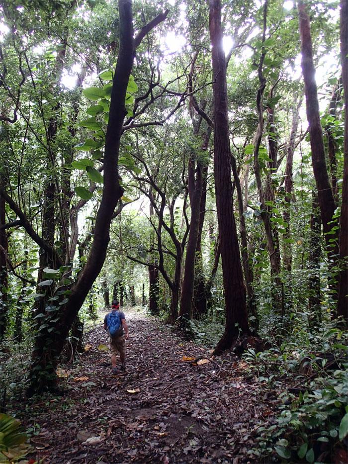 Nuuanu forest