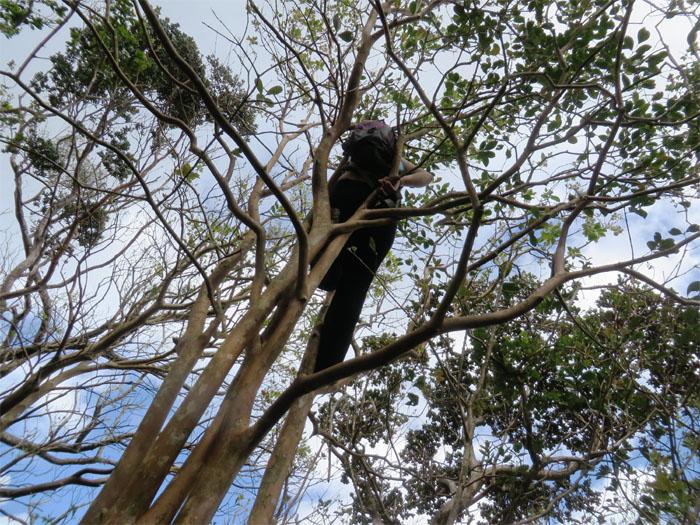 Lyzel in a tree