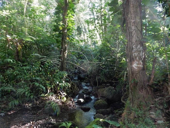Waikeakua stream