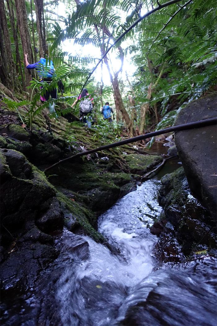 Following the stream
