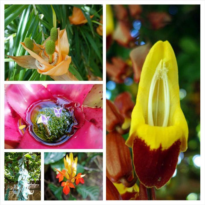 Assorted flora