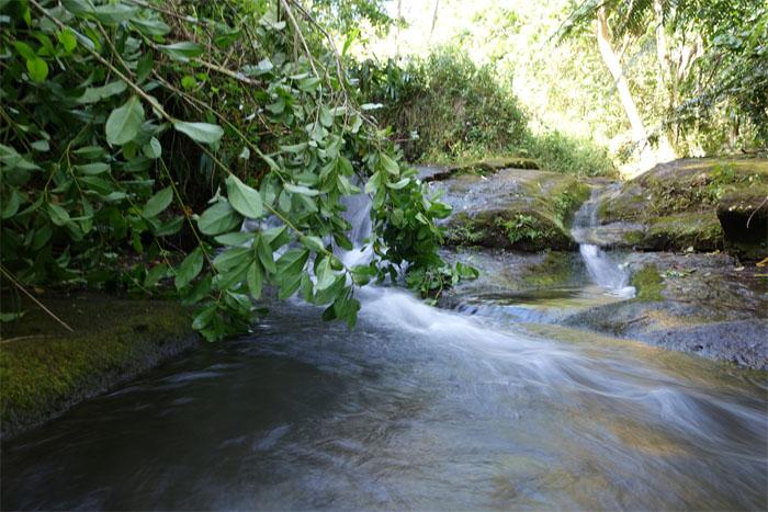 Moss slides