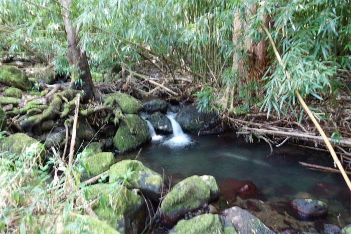 Naniuapo stream