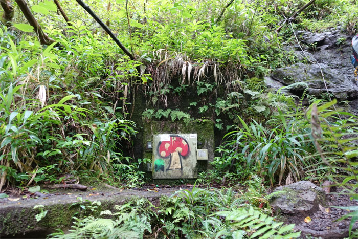 Seeking the magic mushroom